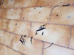 Casalnuovo, la cenere caduta sui balconi