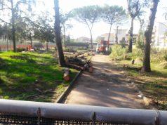 pini tagliati in piazzetta Montessori